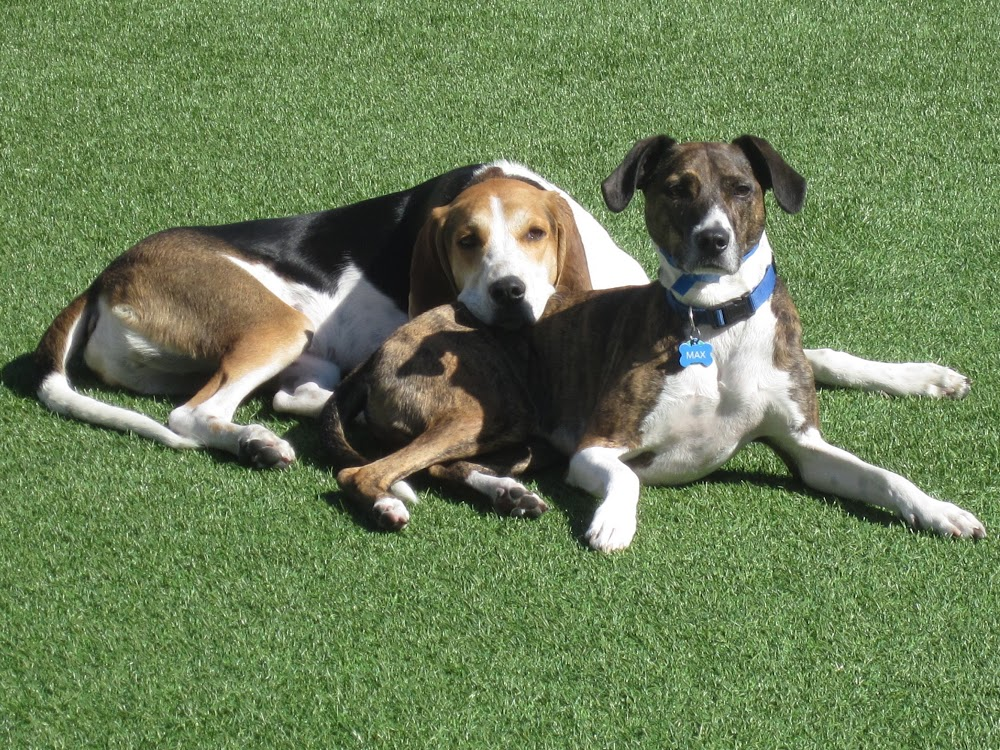 Image of Woof's Play & Stay which provides dog boarding in or near Shawnee Mission, KS